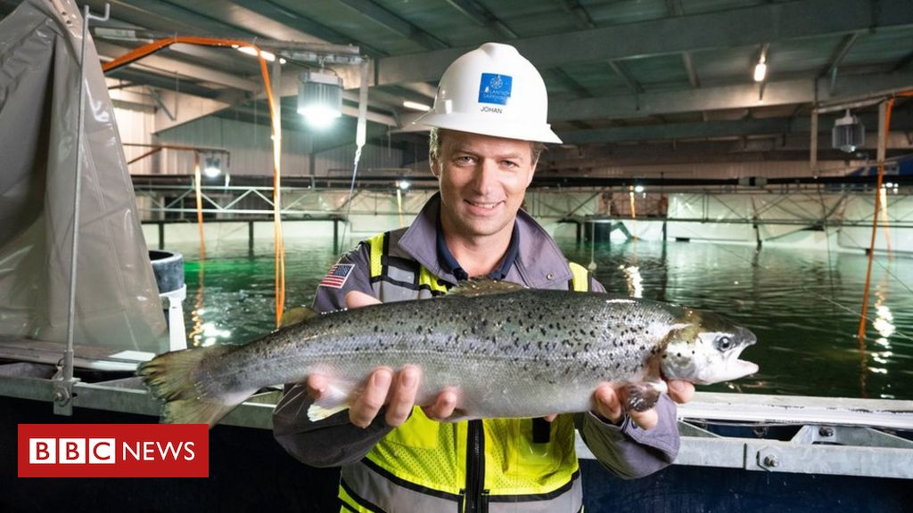 The salmon you buy in the future may be farmed on land