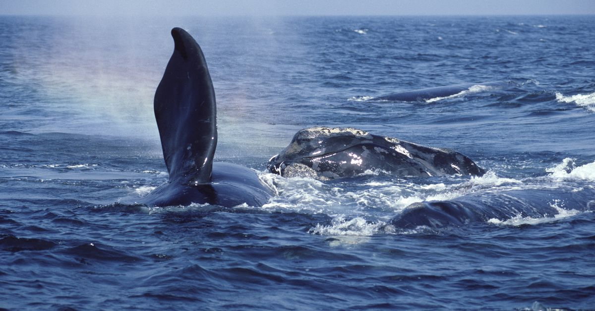Whale hugs, 'active sea snakes' and the wild world of whales