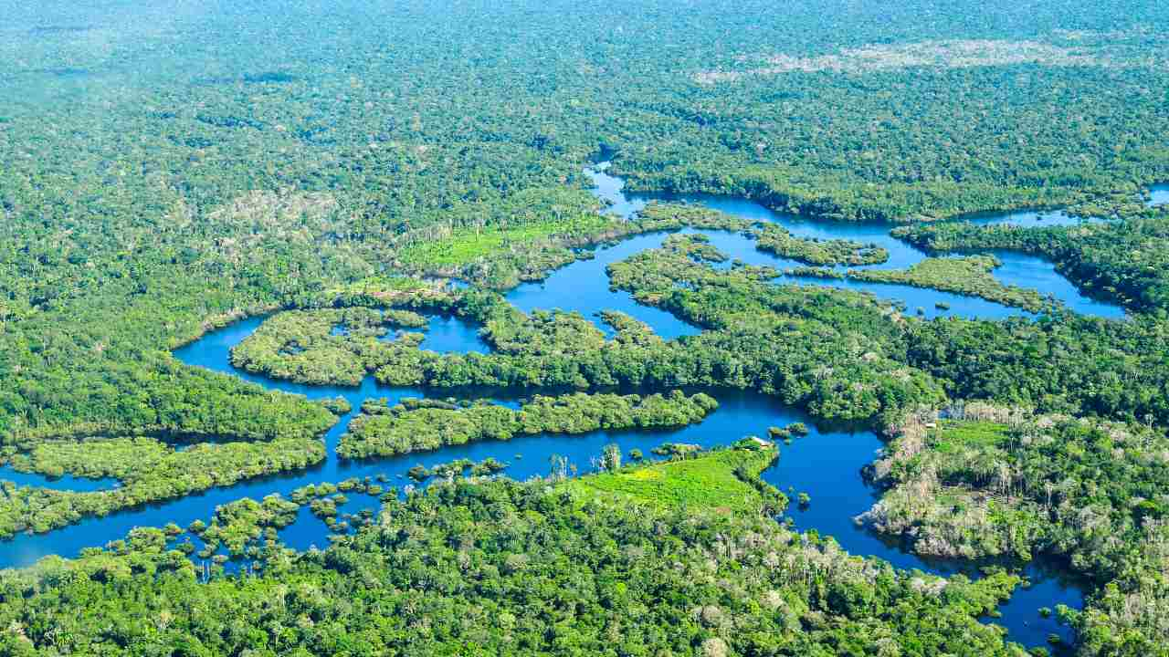 Brazil's Amazon forest released more carbon dioxide than it absorbed over the past decade: Study- Technology News, Firstpost