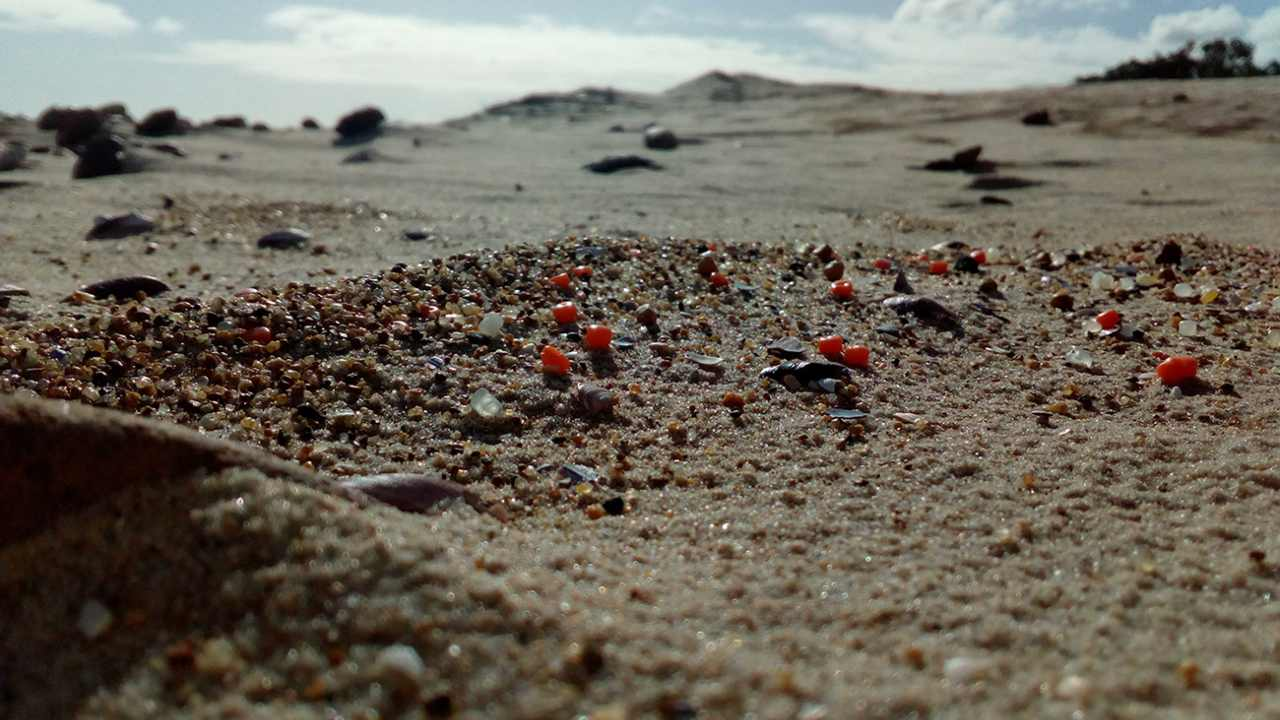 Plastic waste has become part of our microcosmos, even found among the grains of sand on this Uruguayan beach. Photo by Mauricio Ruiz (Uruguay)