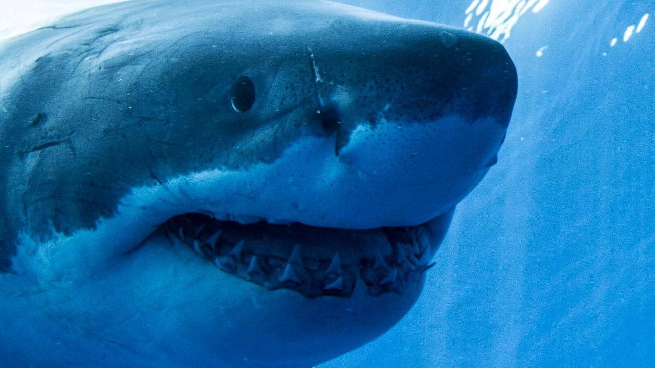 Shark teeth lost to Antarctica millions of years ago recorded Earth's climate history- Technology News, Firstpost