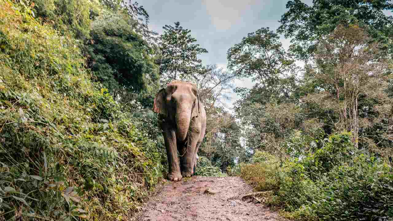 India will conduct the first scientific assessment of its elephant population in 2022- Technology News, Firstpost
